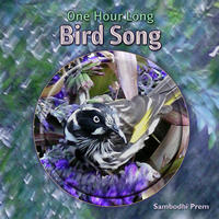 [One Hour Long Bird Song by Sambodhi Prem]